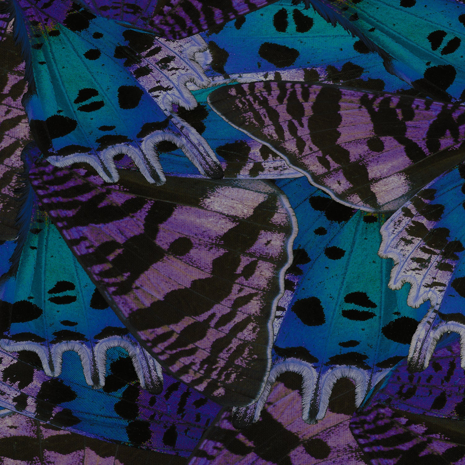Moody Butterfly Fitted Skirt