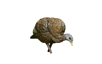 Avian-X LCD - Feeder Turkey Decoy