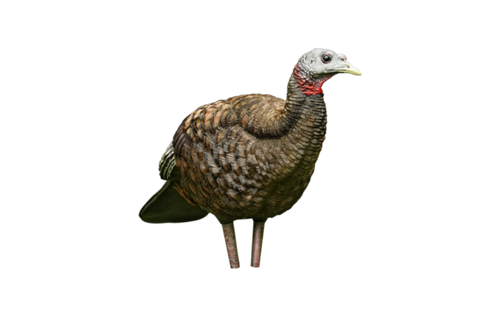 Avian-X LCD - Breeder Turkey Decoy
