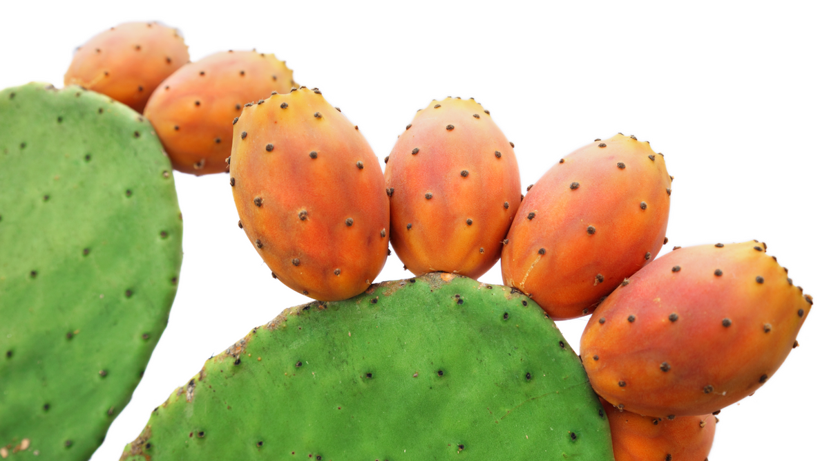 Who Would Have Thought That Nopal Cactus Would Be So Healthy | Vitality and Wellness Centre