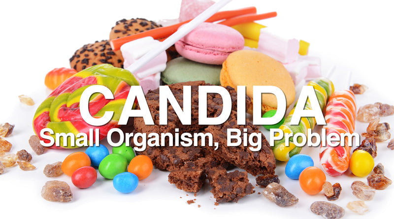 Candida The Small Organism Causing Big Problems