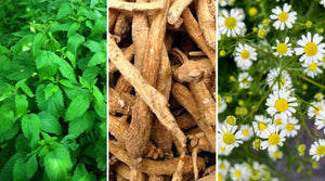 Herbal Medicine - Natures Alternative | Vitality and Wellness