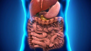 What is a Digestive Detox? | Vitality and Wellness