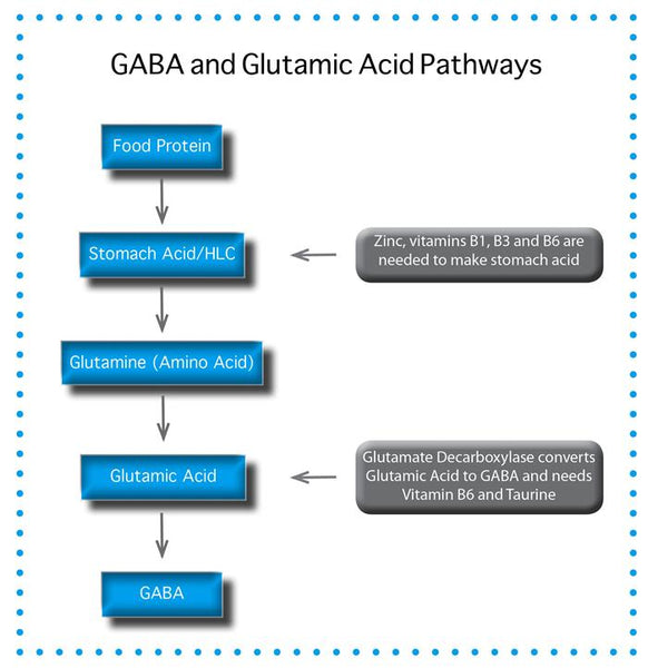 GABA and Glutamic Acid Pathway Flow Chart
