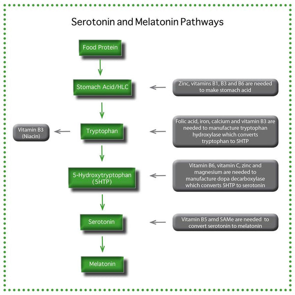 Serotonin and Melatonin Pathway Flow Chart