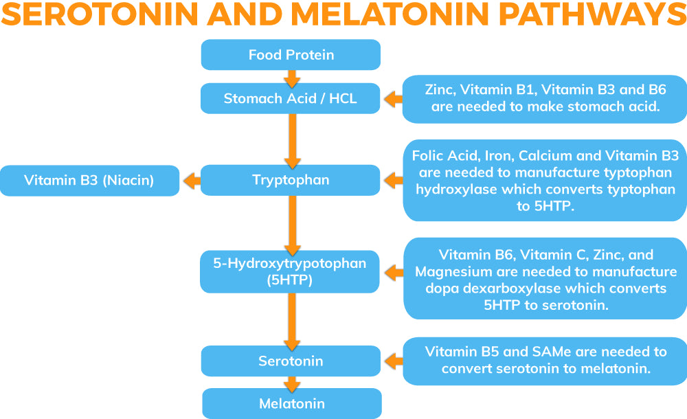 Serotonin and Melatonin Pathway Inforgraphic
