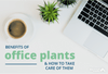The Benefits of Office Plants and How to Take Care of Them
