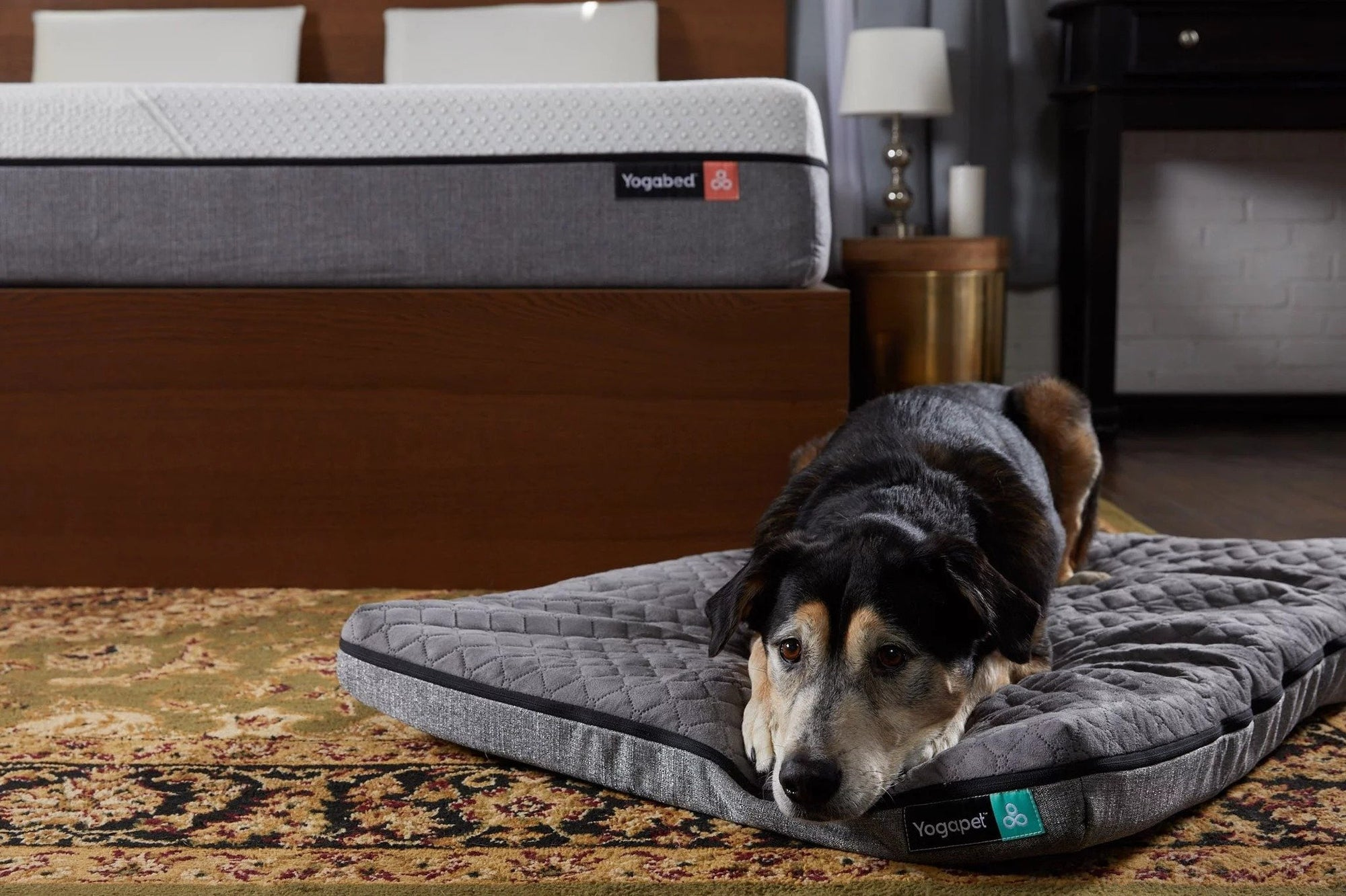 Bed Sharing With Furry Friends - Yogasleep | Love Real Sleep