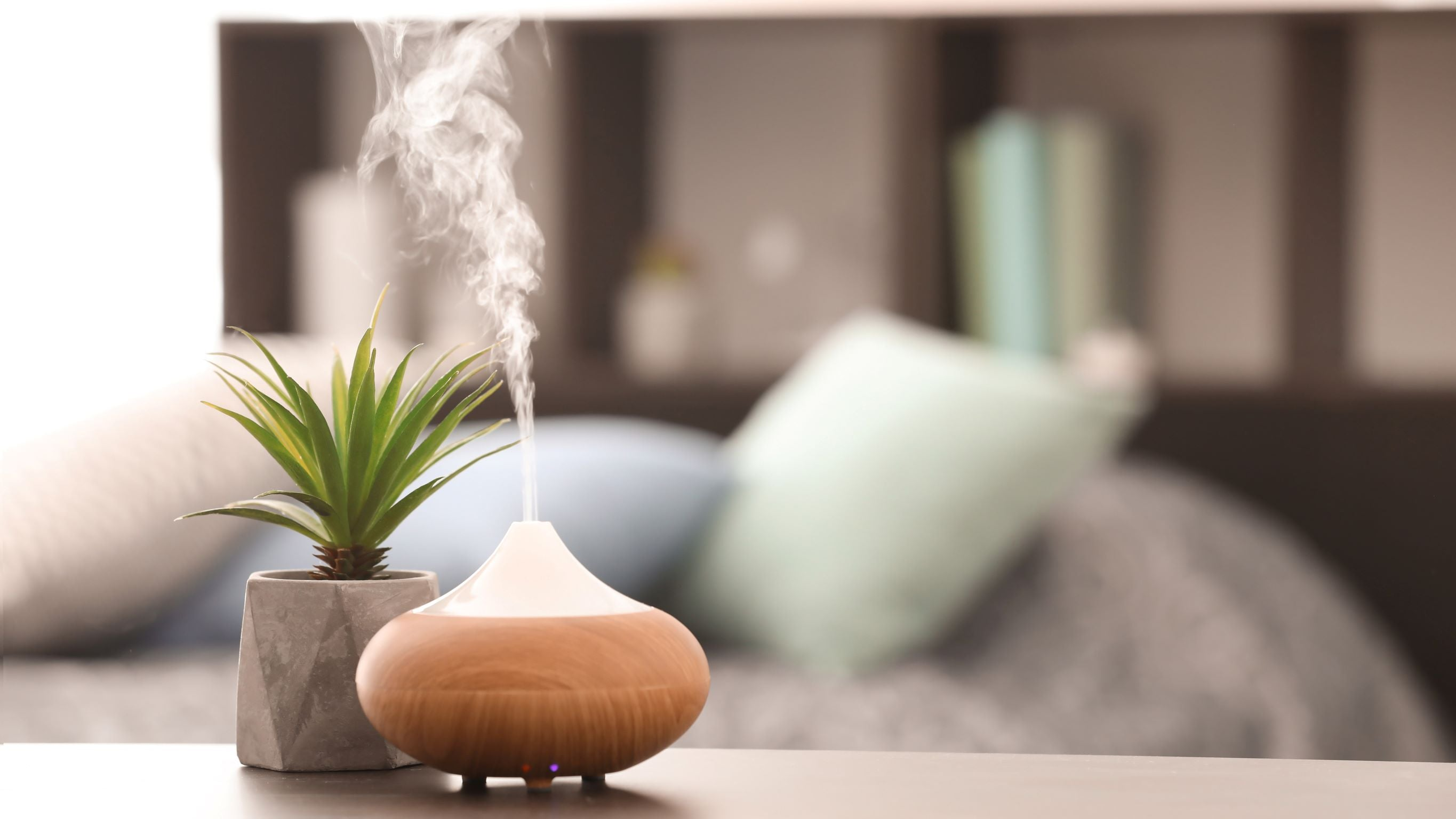 aromatherapy diffuser and plant