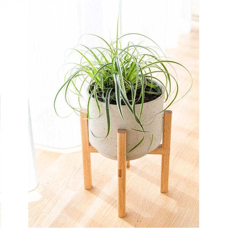 Adjustable Plant Stand - Medium