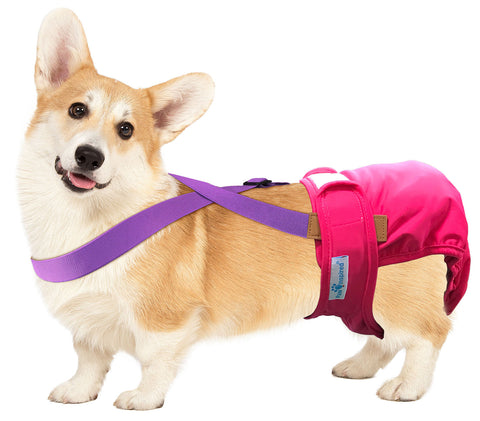 Paw Inspired Washable and Disposable Dog Diaper Suspenders, Purple