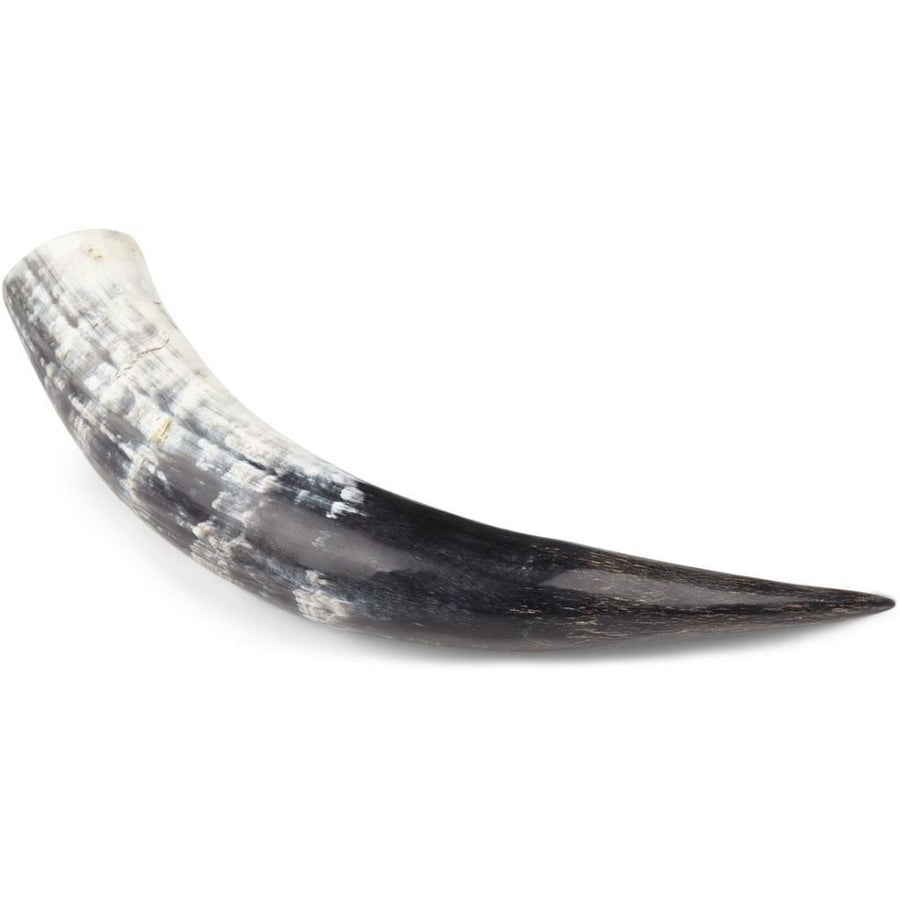 South african Cow horn | Polished | 30+ cm.