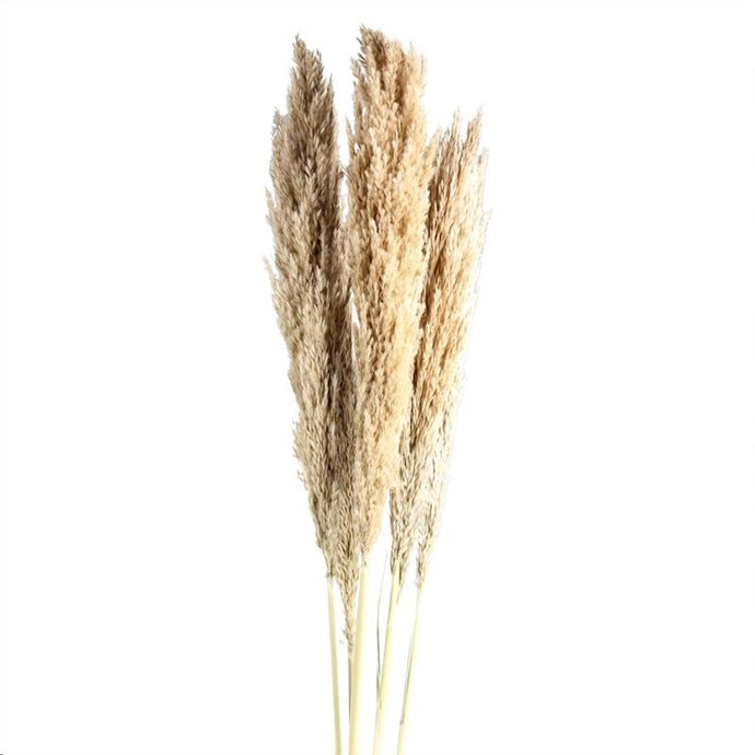 pampas rietgras grass grasses Phalaris dried flowers arrangement.
