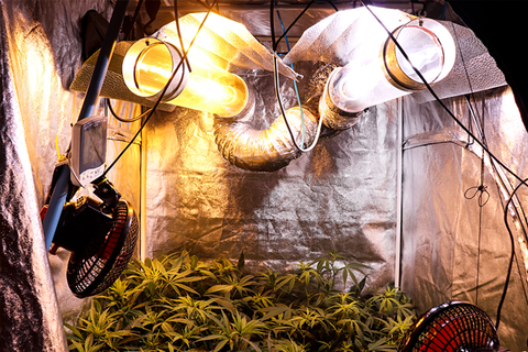 alt='' cultivo cannabis indoor sodio ''
