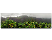Waterfalls at Koolau Mountains - Panoramic