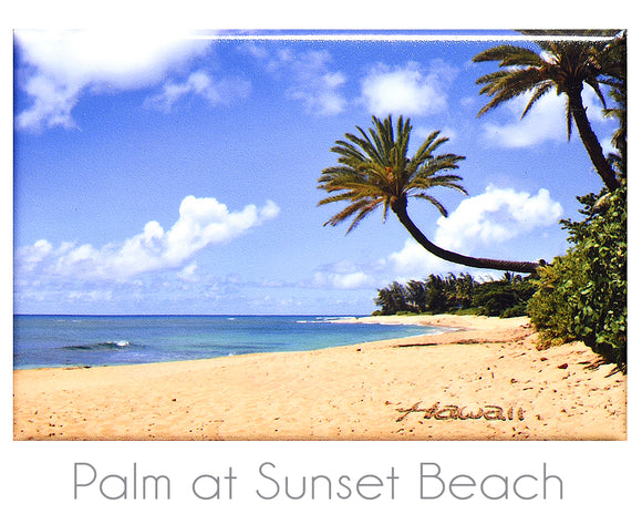 Palm at Sunset Beach 2