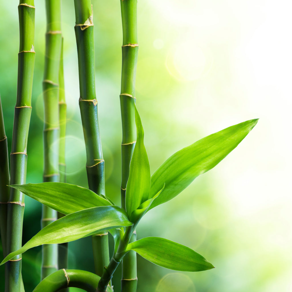 Bamboo & Teak Fragrance Oil