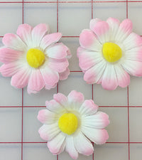 Flowers - Daisy Pink White 3-Pack