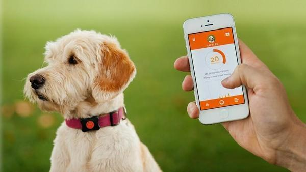 Pet GPS Tracker™