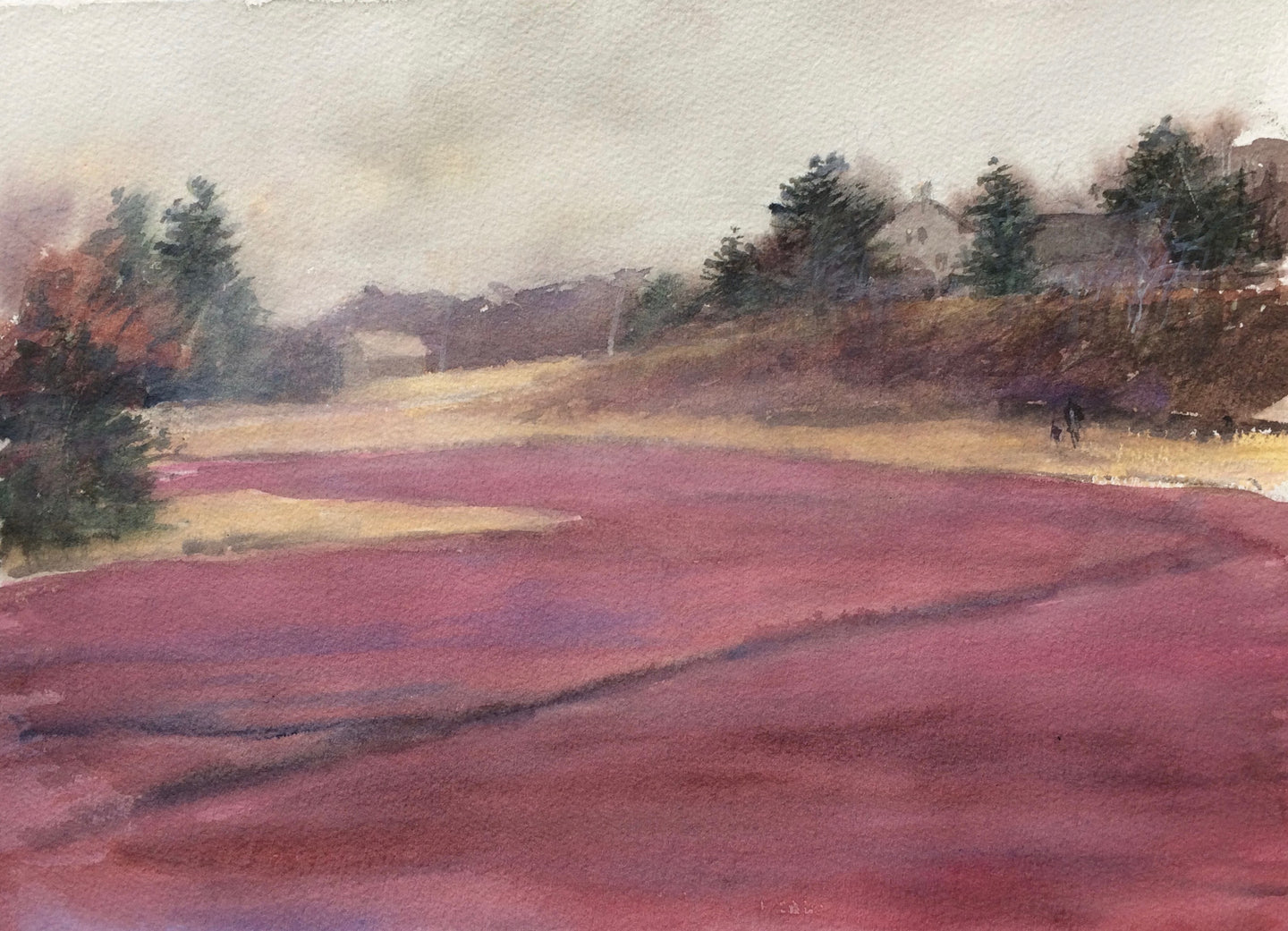 Cranberries and Sea Fog