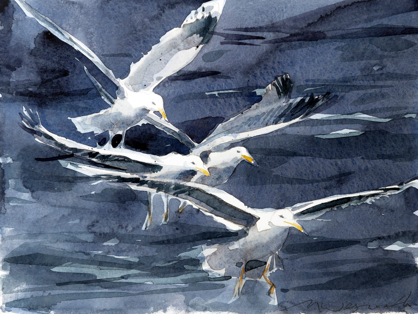Following Gulls