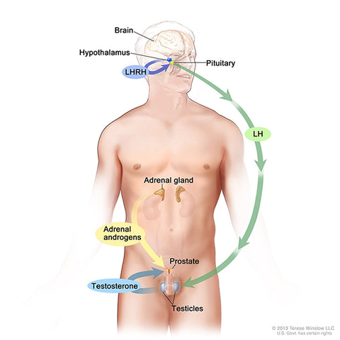 Prostate Hormone Loop | Treatment Options for Localized Prostate Cancer - Pacey MedTech Blog
