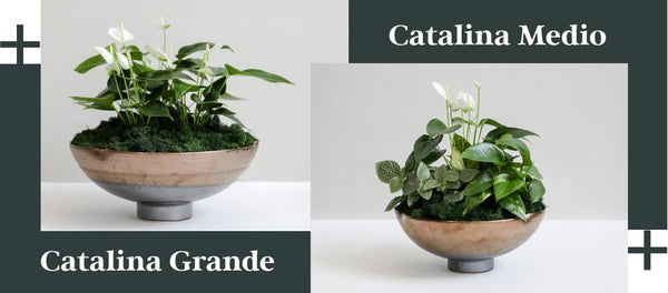 Transitional Style - Petaloom Catalina Grande and Catalina Medio