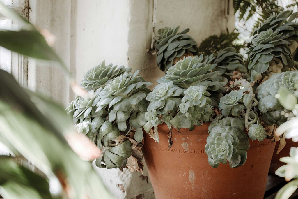 Lighting Conditions for Succulents