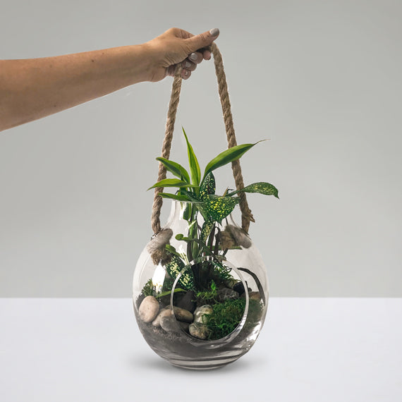Medium Green Oasis Terrarium - Petaloom