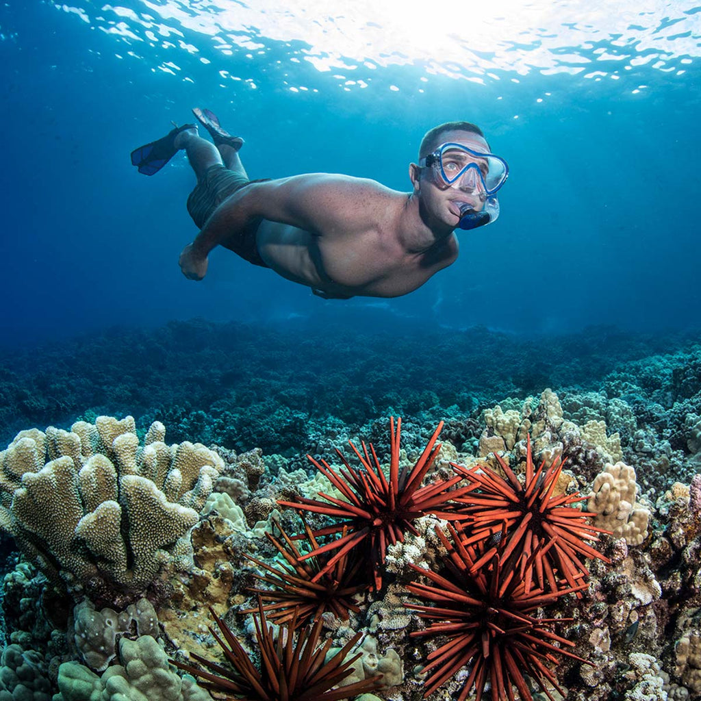 Coral Reef Etiquette when Snorkeling or Scuba Diving by Seavenger