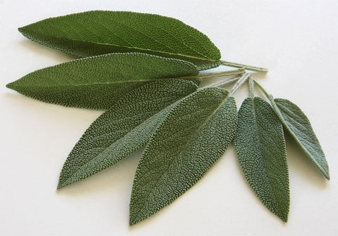 Fresh sage. Sage wands are made from the same stuff you can easily grow at home!