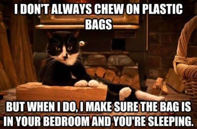 cat-plastic-bags