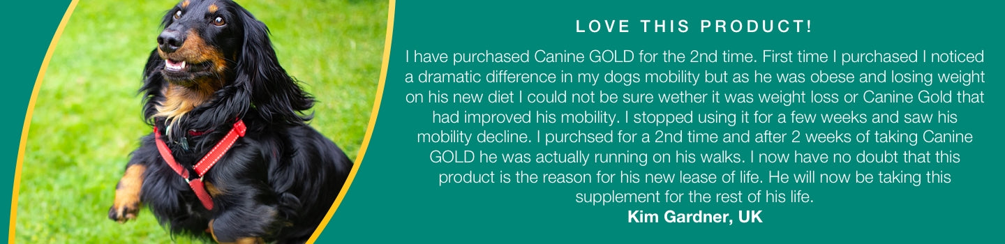 Canine Gold Review - Kim