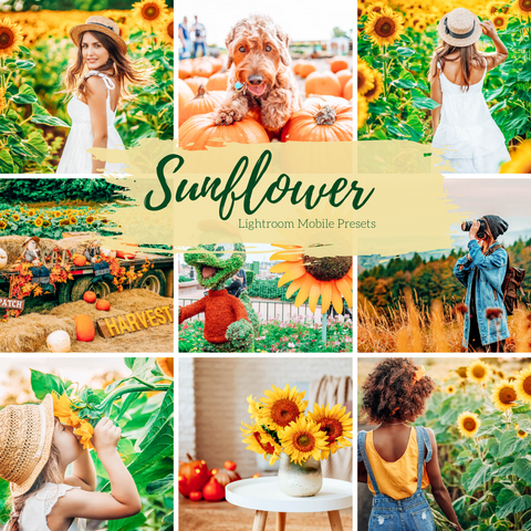 4 Mobile Lightroom Presets, Sunflower Sunshine Fall Lightroom Mobile Instagram Presets  Lifestyle presets Travel Photography Presets