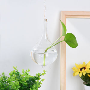 Hydroponic Glass Vase No Frame