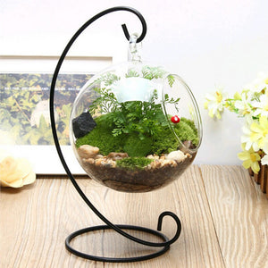 Glass Hanging Flower Pot Hydroponics