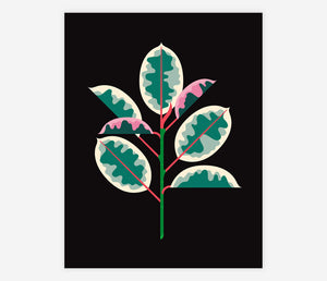 Ruby Red Ficus by Always With Honor - Archival Print