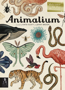 Animalium curated by Katie Scott & Jenny Broom