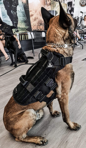 Scorpion Projects Krieger Tactical K9 Tactical Harness