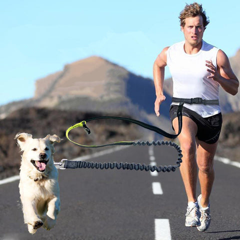 Runner's Dog Leash