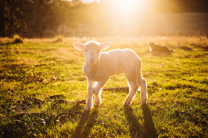 Worthy Is The Lamb - You Are Worthy To Be Loved And To Be Happy.