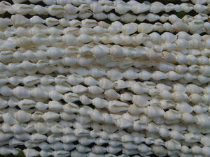 Natural Nassa Seashell  Door Curtain/Window Curtain/Room Devider