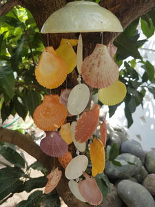Pecten Seashell Wind Chime