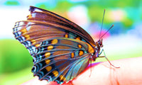 Real Vivid  Butterfly
