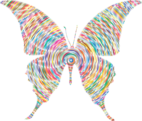 Spiral Color  Butterfly