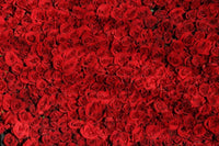 Bed of red roses