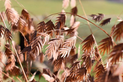 Brown (dried) plants outdoor