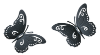 Two Black Butterfly