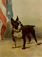 Earl, Maud (1864-1943) - The Power of the Dog 1910 (Boston Terrier)