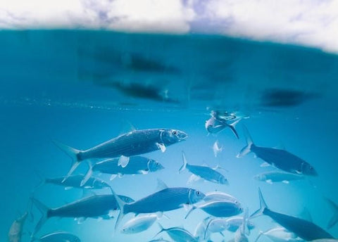 Fishes under water